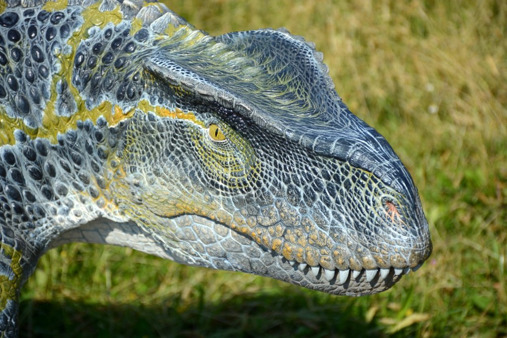 Ticinosuchus, foto by Daniela Morelli