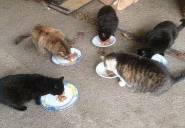 gatti-mangiano-colonia-fb-0031-360x250.jpg