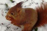 scoiattolo aggredito da cane nei giardini della Villa Reale di Monza