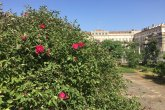 roseto monza