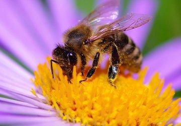 10-fatti-moria-di-api-360x250.jpg