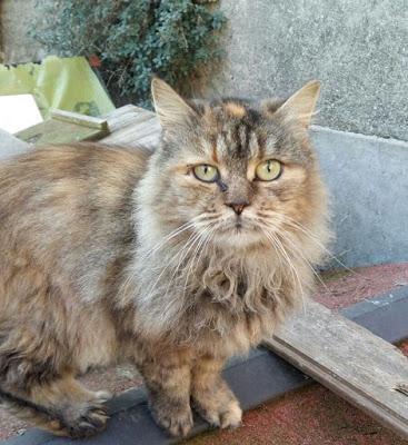 gatta-buonarroti-wa0027