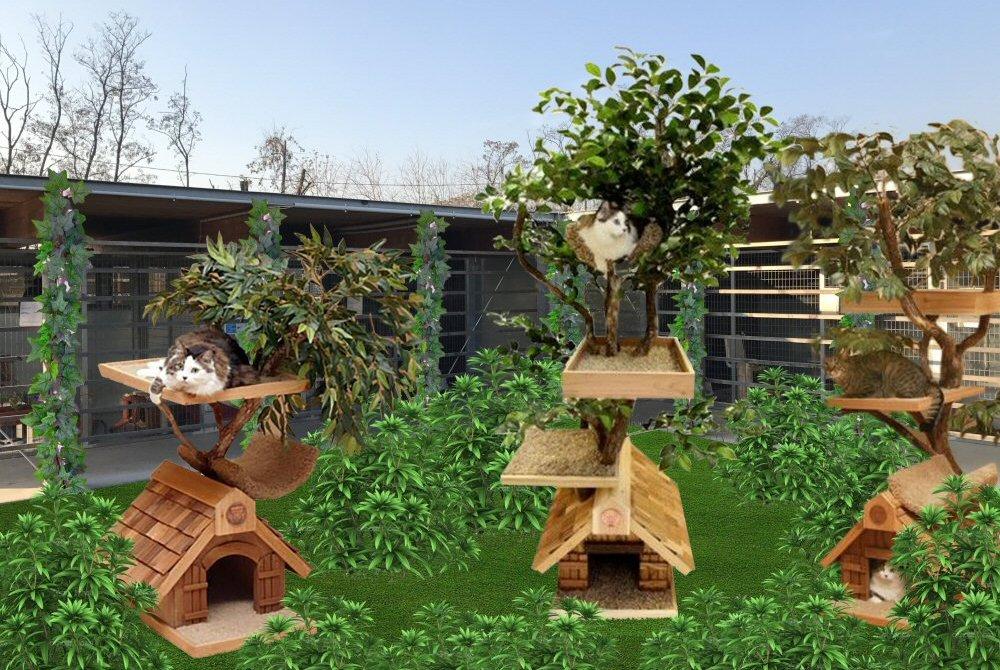 giardino gatti