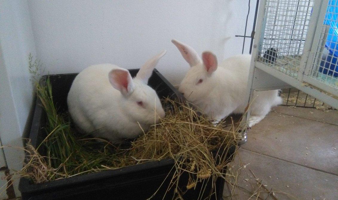 collina dei conigli