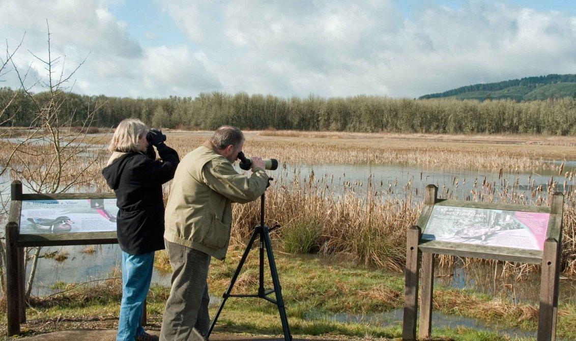 birdwatching lambro