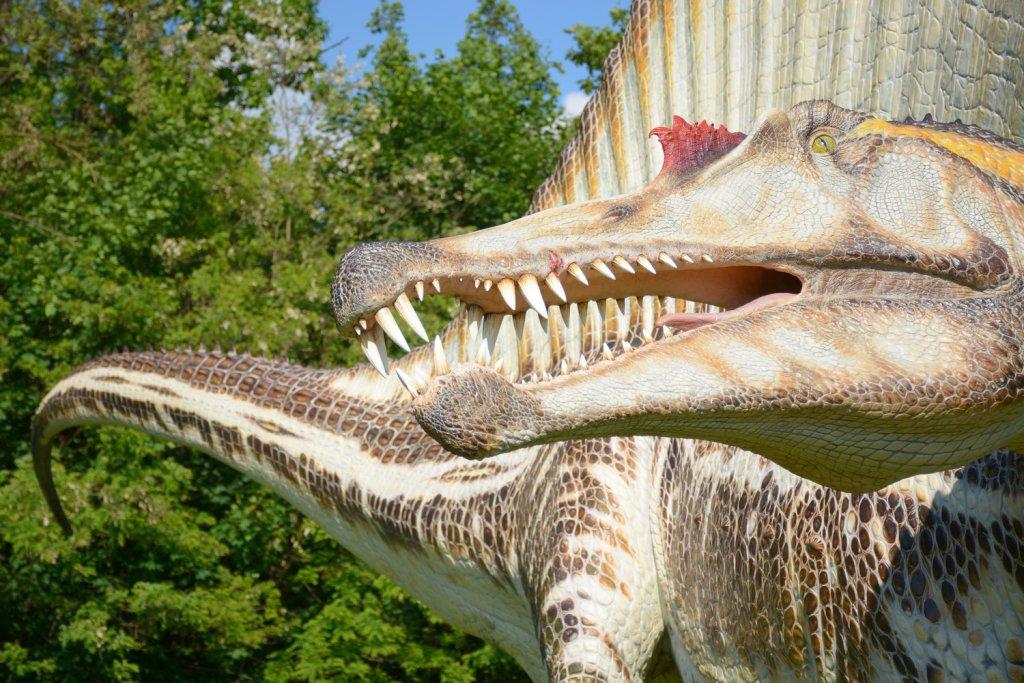 Spinosaurus, foto by Daniela Morelli