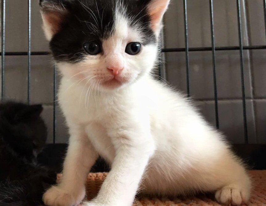 spesso Famiglia di gattini salvata dall'ENPA - Monza in Diretta WC87