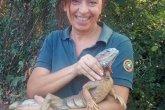 iguana groane