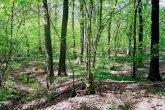 bosco-cesate-800