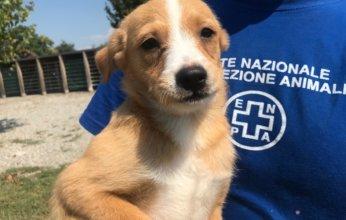 cucciolo-canile-Monza-fb-02-346x220.jpg