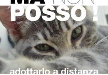 VORREI-MA-POSSO_gattino-360x250.jpg