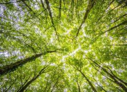 forest-2800784_960_720-kh1E-U4339042365804TvH-593x443@Corriere-Web-Sezioni-260x188.jpg