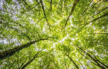 forest-2800784_960_720-kh1E-U4339042365804TvH-593x443@Corriere-Web-Sezioni-346x220.jpg