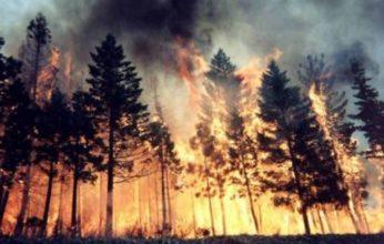 CroppedImage720439-incendi1-1-346x220.jpg