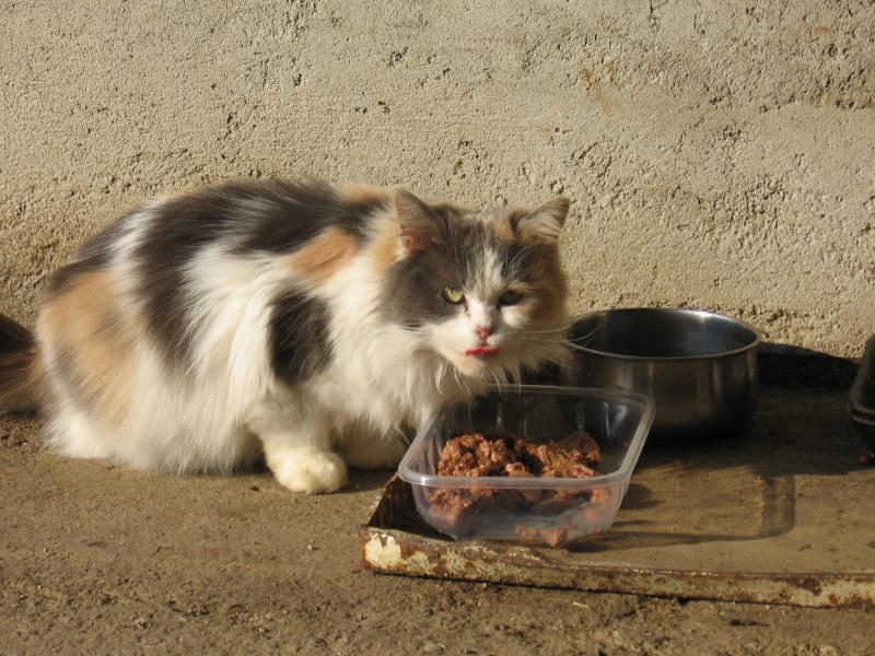 Desio corso gratuito per tutori di colonie feline - Monza in Diretta