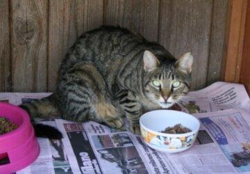 gatto-colonia-buonarroti-fb_5672-360x250.jpg