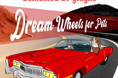 Dream Wheels For Pets